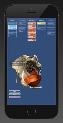 Screenshot from CSAT's Anatomy of the Male Pelvis app for the iPad and iPhone